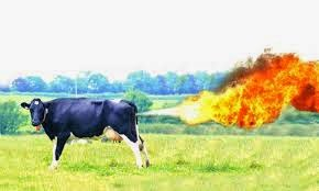 The EPA thinks cow flatulence is a serious problem